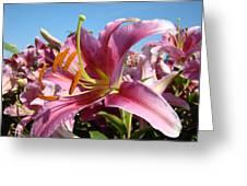 Blue Sky Floral Landscape Pink Lilies Art Prints Canvas Baslee Troutman Greeting Card