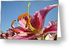 Blue Sky Florals Art Pink Calla Lily Blooming Baslee Troutman Greeting Card