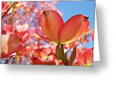 Blue Sky Pink Azalea Dogwood Flowers 4 Landscape Nature Artwork Greeting Card