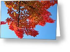 Blue Sky Red Autumn Leaves Sunlit Orange Baslee Troutman  Greeting Card