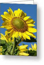 Blue Sky Sunflower Day Greeting Card