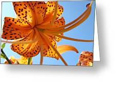 Blue Sky Sunshine Tiger Lily Flowers Giclee Prints Baslee Troutman Greeting Card