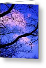 Blue Sky Through The Trees Greeting Card