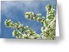 Blue Sky White Clouds Landscape Art White Tree Blossoms Spring Greeting Card