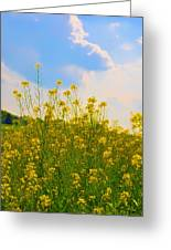 Blue Sky Yellow Flowers Greeting Card