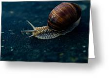 Blue Snail Greeting Card