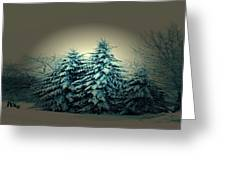 Blue Spruce-maine Evergreens Greeting Card