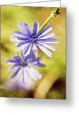 Blue Star #4 Greeting Card