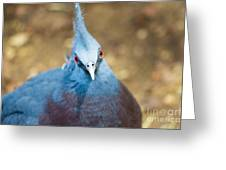Blue Stare Greeting Card