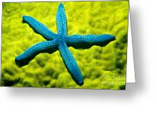 Blue Starfish On Poritirs Greeting Card