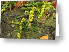 Blue-stemmed Goldenrod - Solidago Caesia Greeting Card