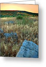 blue stones amongst the olive groves near Iznajar Andalucia Spain Greeting Card