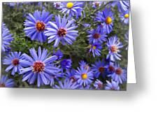 Blue Street Daisies Greeting Card