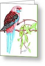 Blue Tail Parrot - Green Day Greeting Card