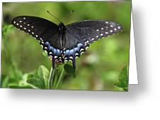 Blue Tailed Black Butterfly Greeting Card