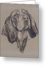 Blue Tick Coonhound Greeting Card