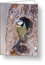 Blue Tit Leaving Nest Greeting Card