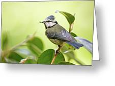 Blue Tit With Caterpillar Greeting Card
