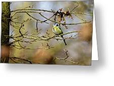 Blue Tit Woods Greeting Card