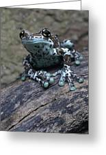 Blue Tree Frog Greeting Card