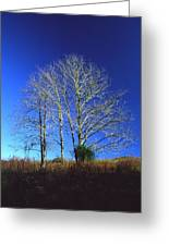 Blue Tree In Tennessee Greeting Card