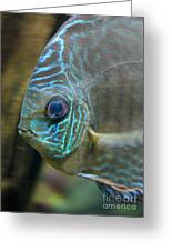 Blue Tropical Fish Greeting Card