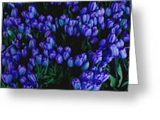 Blue Tulips Greeting Card