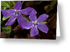 Blue Violet Couple Greeting Card
