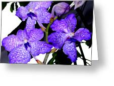 Blue Violet Orchids Greeting Card
