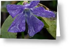 Blue Violet Raindrops Greeting Card