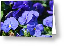 Blue Violets Greeting Card