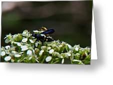 Blue Wasp 1 Greeting Card