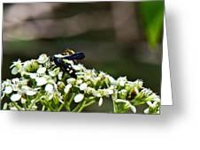 Blue Wasp 2 Greeting Card by Douglas Barnett