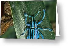 Blue Weevel Greeting Card