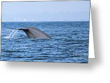 Blue Whale Tail Flop Greeting Card