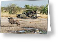Blue Wildebeest Beside Puddle With Jeep Behind Greeting Card