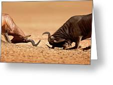 Blue Wildebeest Sparring With Red Hartebeest Greeting Card