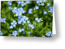 Blue Wildflowers Forget Me Nots Greeting Card