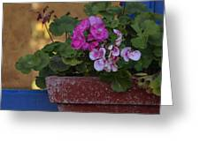 Blue Window With Geraniums Greeting Card
