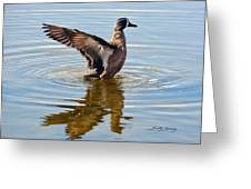 Blue Winged Teal 3 Greeting Card