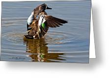Blue Winged Teal 4 Greeting Card