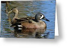 Blue Winged Teal Pair Greeting Card