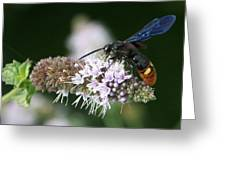 Blue-winged Wasp On Mint Greeting Card
