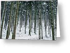Blue Winter Forest Greeting Card