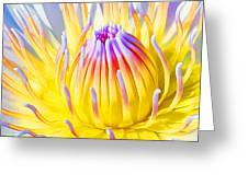Blue Yellow Lily  Greeting Card