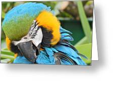 Blue/yellow Parrot Greeting Card