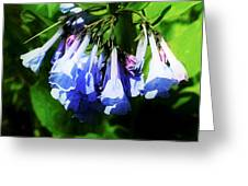 Bluebell 21 Greeting Card