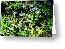 Bluebell 22 Greeting Card