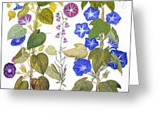 Bluebell And Morning Glory Greeting Card
