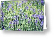 Bluebell Bluebells Flowers Blooming In Spring Greeting Card